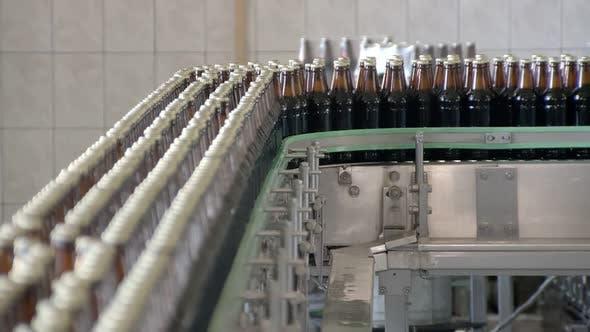 Cover Image for Bottling Line in Beer Factory, Bottles Are Moving Over Transporting Belt