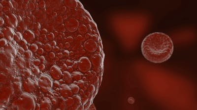 Red Blood Cell in Blood