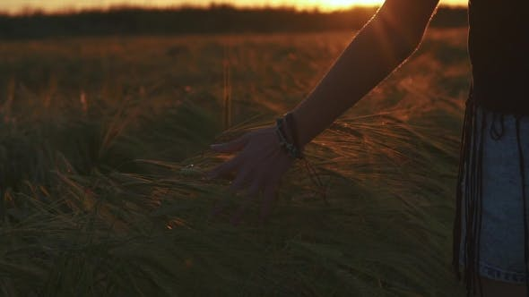 Thumbnail for Female Hand in the Field at Sunset Light