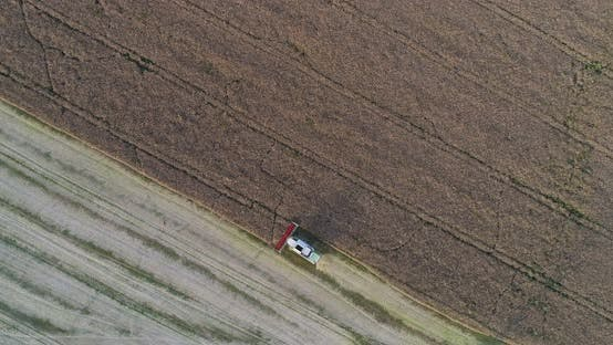 Thumbnail for Combine Harvester Harvesting Oilseed Rape Field Agriculture