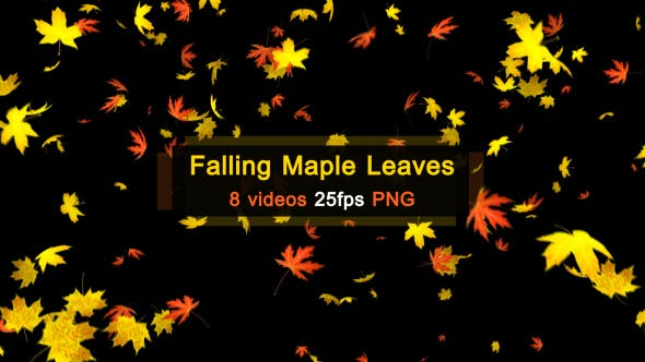 Thumbnail for Maple Leaves Falling