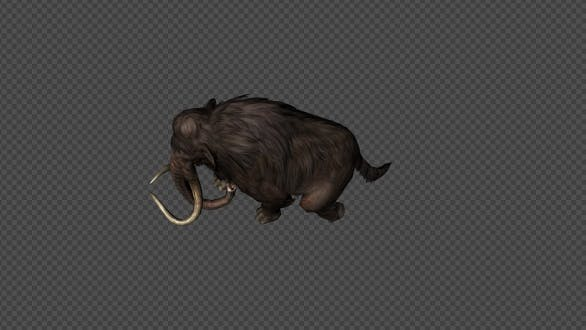 Mammoth Run Pack 4In1