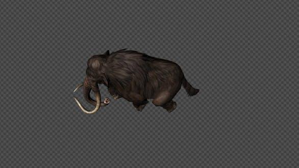 Mammoth Walk Pack 4In1