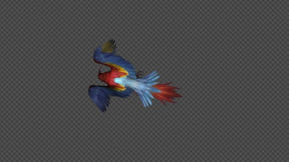Parrot Attack Pack 4 In 1
