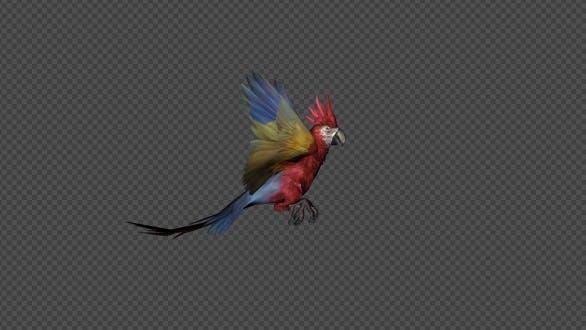 Thumbnail for Parrot Land Pack 4 en 1