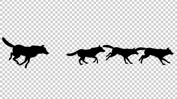Wolfpack Silhouette Run Animation