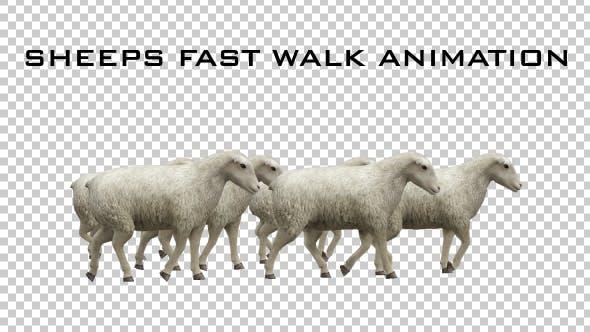 Thumbnail for Sheeps Fast Walk