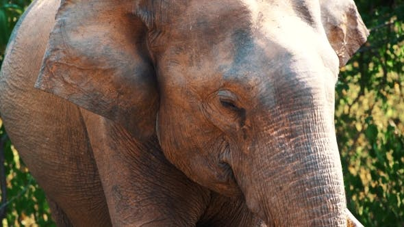 Thumbnail for Elephant in Safari Park