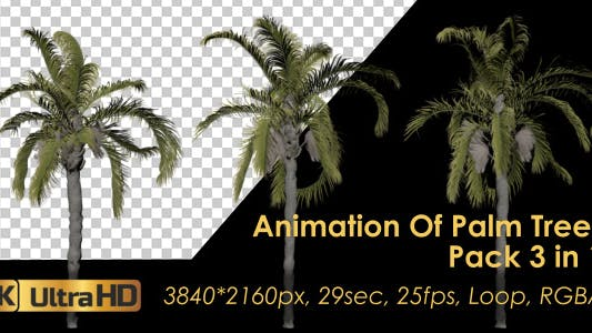 Thumbnail for Animation Pack Of Palm Trees