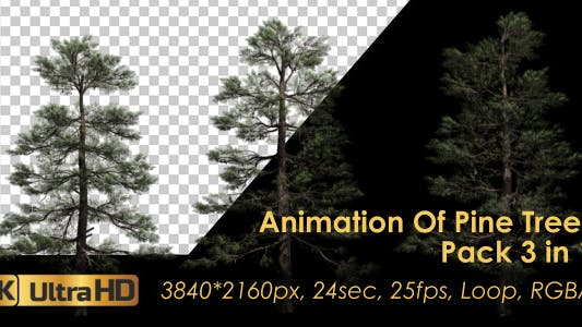Thumbnail for Animation Pack Of Pine Trees