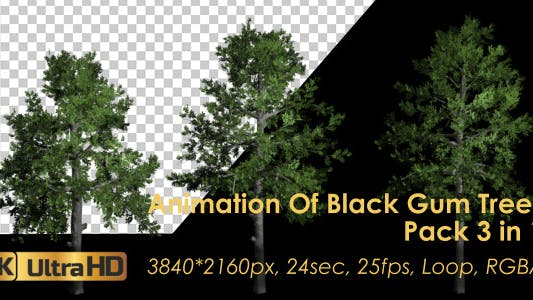 Thumbnail for Animation Pack Of Black Gum Trees