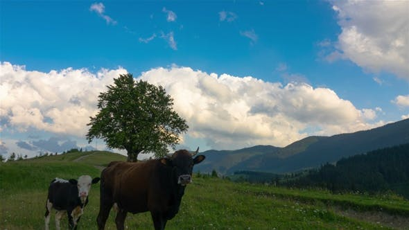 Thumbnail for Mountainous Landscape with a Lonely Tree and Walking Cows
