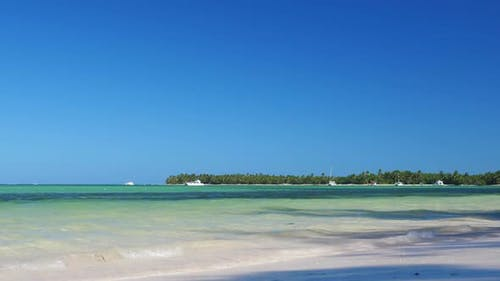 Coconut Palm Tree on Tropical Beach