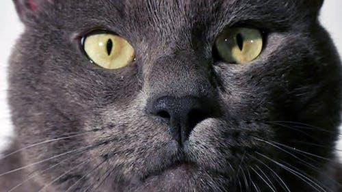 Katze im Zimmer - Smart Face - 03