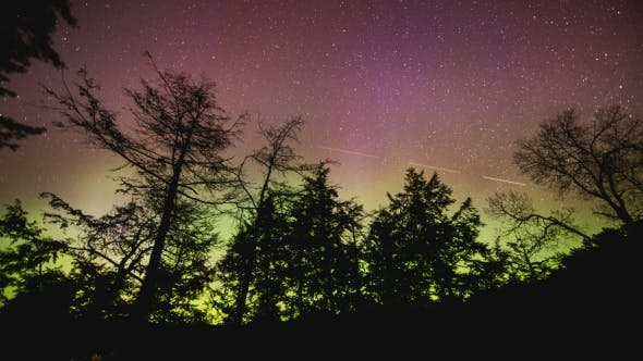 Thumbnail for of Northern Lights Dancing Across Sky Silhouetting Black Trees