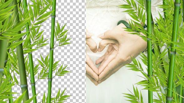 Thumbnail for Bamboo Alpha 02