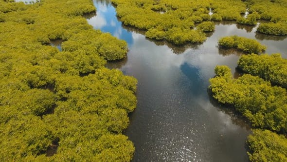 Thumbnail for Mangrove Forest in Asia Philippines Siargao Island