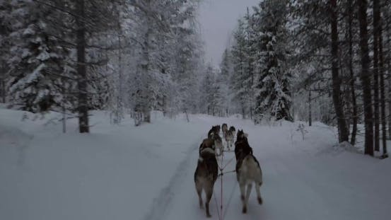Thumbnail for Dogsled in Winter Forest