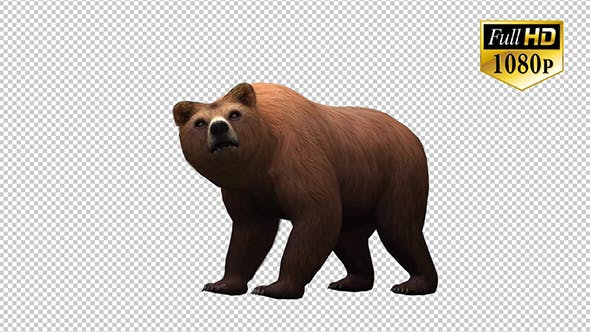 Thumbnail for 3D Bear 2