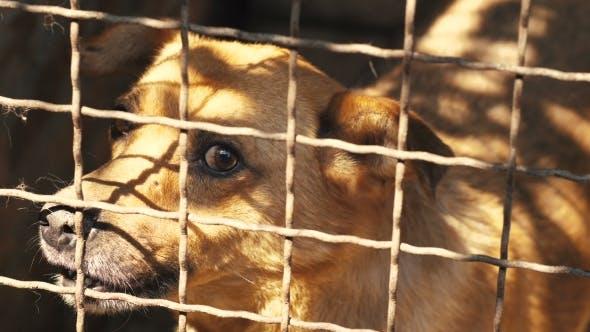 Thumbnail for Angry Dog Behind Bars