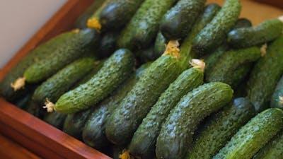 Cucumbers at Market