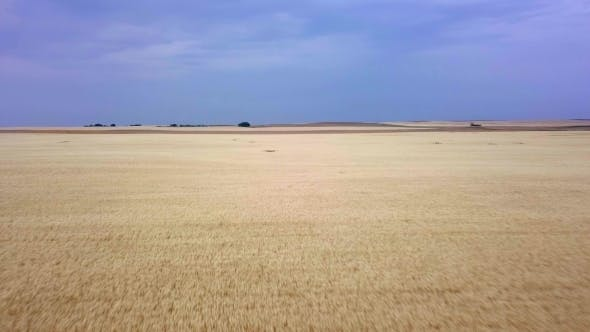 Thumbnail for Aerial Flyover of Prairie Wheat Field