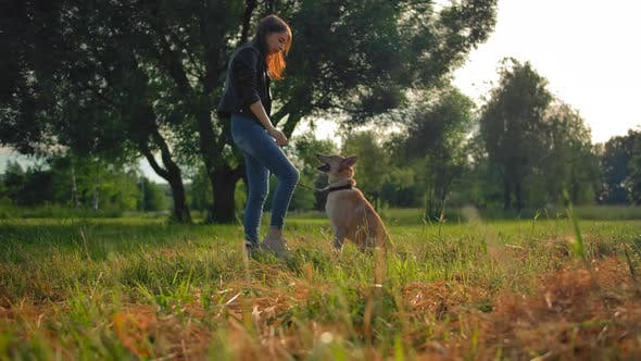 Thumbnail for A Young Girl Is Training Her Outbred Dog in a Park.