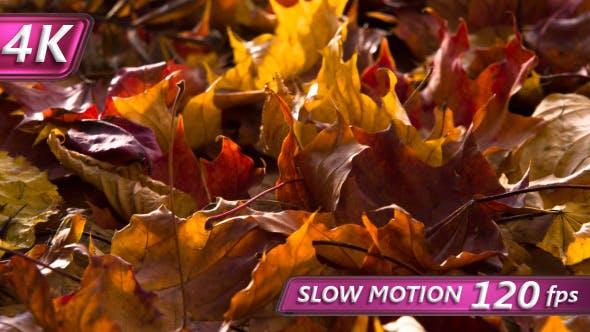 Thumbnail for Fallen Autumn Leaves Dry