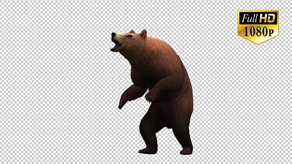Thumbnail for 3D Bear 6