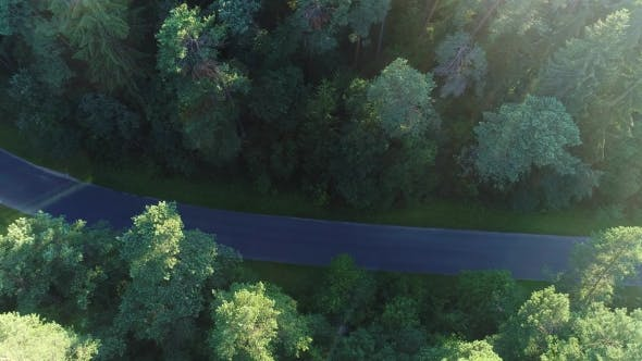 Thumbnail for Aerial View of Sport Car Driving in Forest