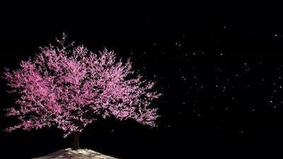 Cherry Blossom 03 Alpha 4K