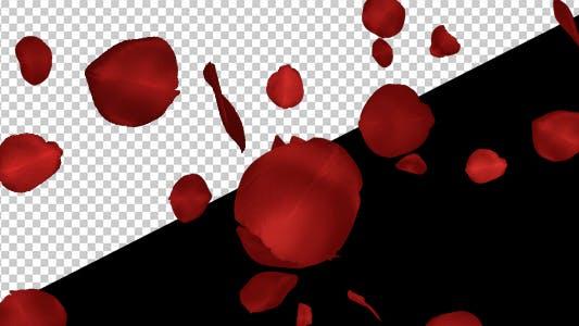 Thumbnail for Red Rose Petals - Falling Loop