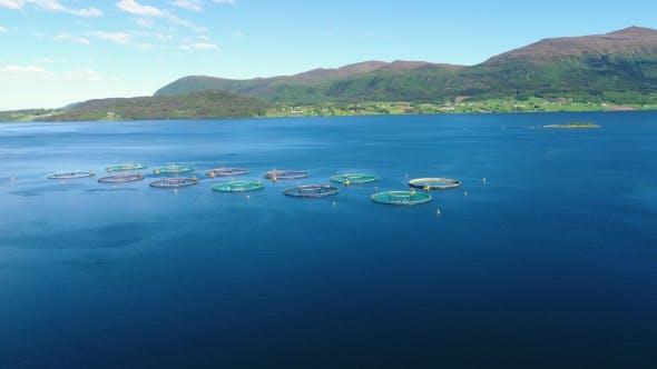 Thumbnail for Aerial Footage Farm Salmon Fishing in Norway