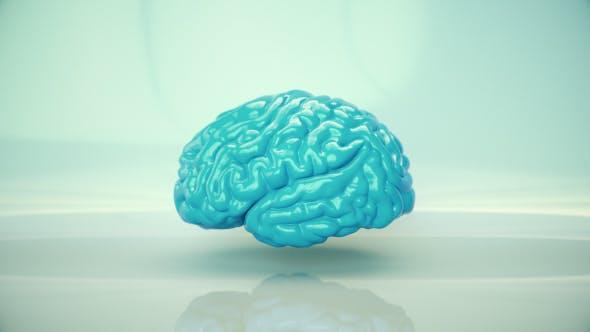 Thumbnail for Brain Rotating