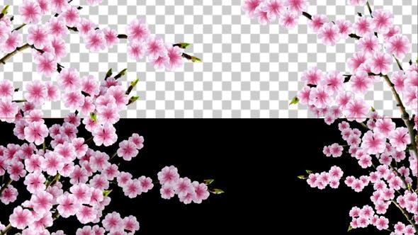 Thumbnail for Sakura Alpha 01