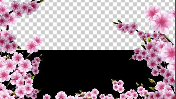 Thumbnail for Sakura Alpha 02