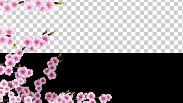 Thumbnail for Sakura Alpha 03