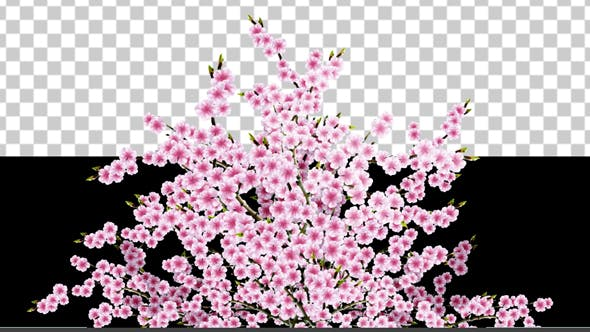 Thumbnail for Sakura Alpha 04
