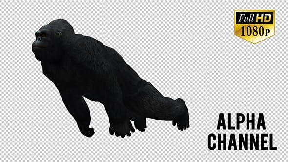 Thumbnail for Gorilla  7