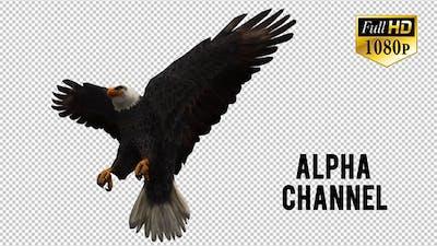 3D Eagle  Animation