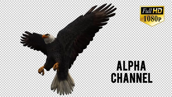 Thumbnail for 3D Eagle  Animation