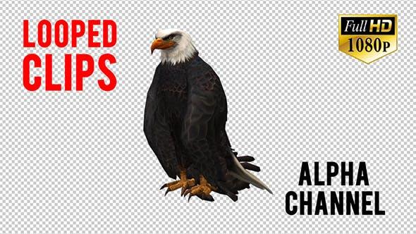 3D Eagle Animation 2