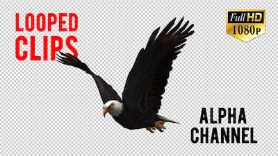 3D Eagle Animation 3