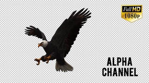 3D Eagle Animation 4