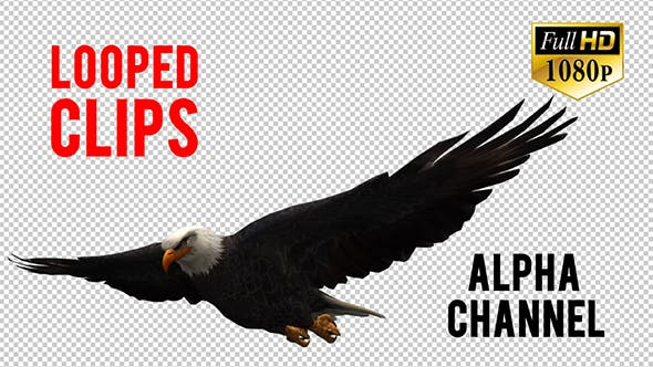 Thumbnail for 3D Eagle Animation 5