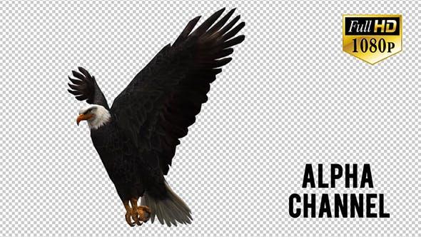 3D Eagle Animation 6
