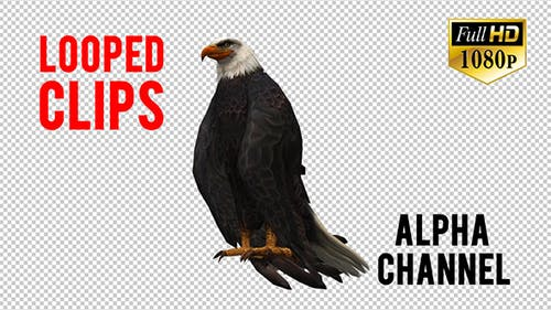 3D Eagle Animation 7