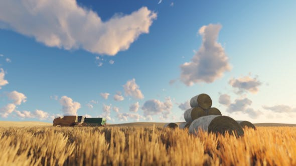 Thumbnail for Wheat Field and Harvester