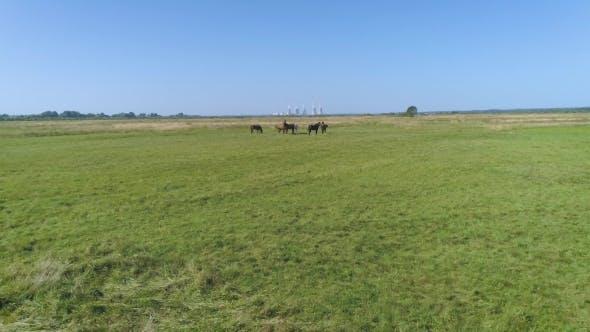 Des images aériennes volent pour fermer les chevaux