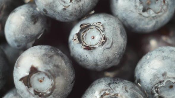 Thumbnail for Fresh, Ripe Blue Berries Rotate, Wild Berry.